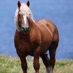 ファナル フランス産の雄種馬です