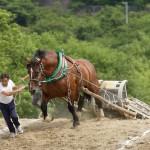 東北馬力大会 馬の里遠野大会 2007.6.24