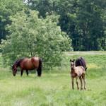 新緑の放牧地