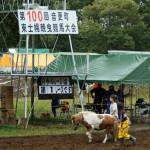 第100回 東士幌輓曳競馬大会