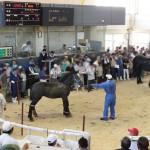 8・9月馬市場 ホクレン十勝地区家畜市場 2011.9.1