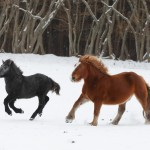1歳馬と渚