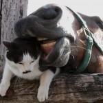 ローズガールちゃんに襲われるネコ