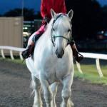 誘導馬のミルキー