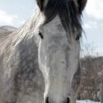 偶然見かけた重種馬たち