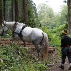 林道から森の中へ