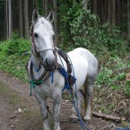 キララちゃん。7歳の牝馬。