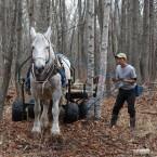 馬搬の見学 2013.11.23
