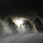 ばんえい競馬 2013.7.14