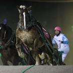 ばんえい競馬 2013.11.23-12.22